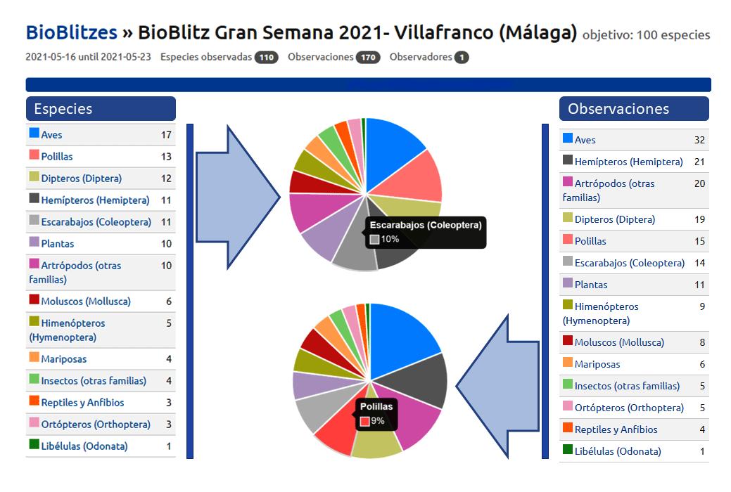 Tablas y gráficos Gran Semana 2021 - Villafranco (Málaga); adaptados de Observation.org