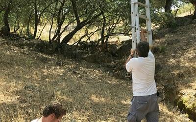 Murciélagos en Sierra Morena