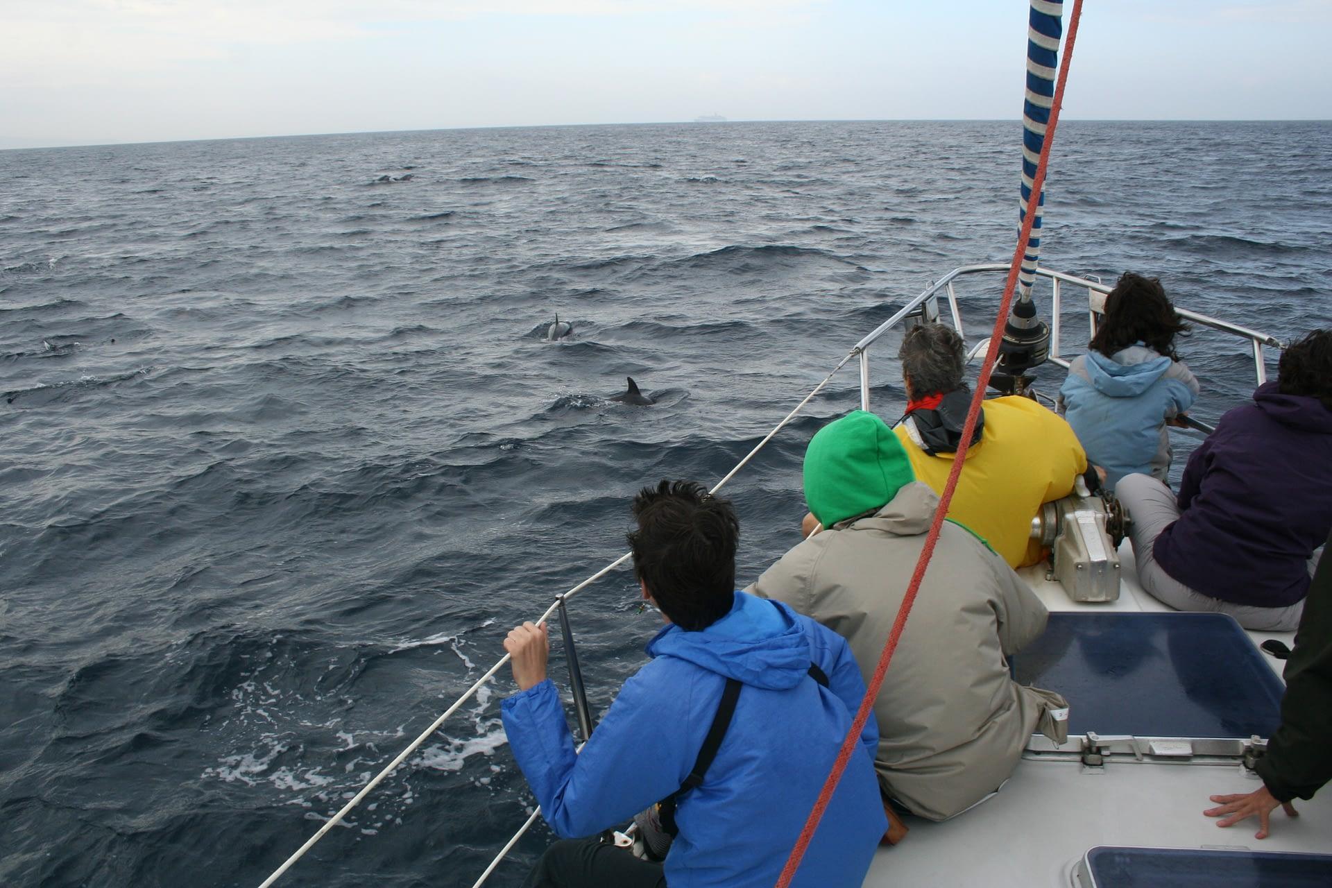 Observación Cetaceos Barco