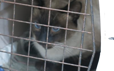 Proyecto Gatos Callejeros de Benarrabá (Parte I)
