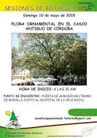 Mayo 2015: Flora ornamental en el casco antiguo de Córdoba.