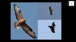9 de septiembre 2021 – MiniWebinar #7 Migración Aves Estrecho