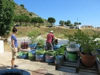 Eco-huerto: avanzando I
