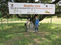 Bioblitz Dehesa San Francisco-2016