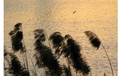 Arvícola 2/2011