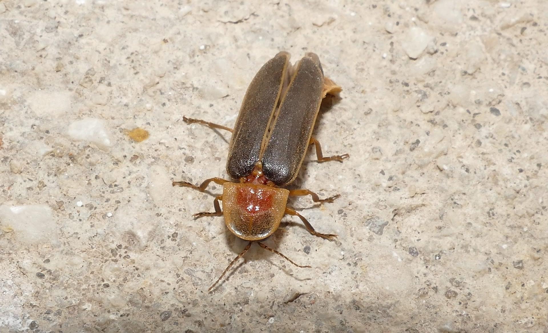 Muestreo de insectos nocturnos