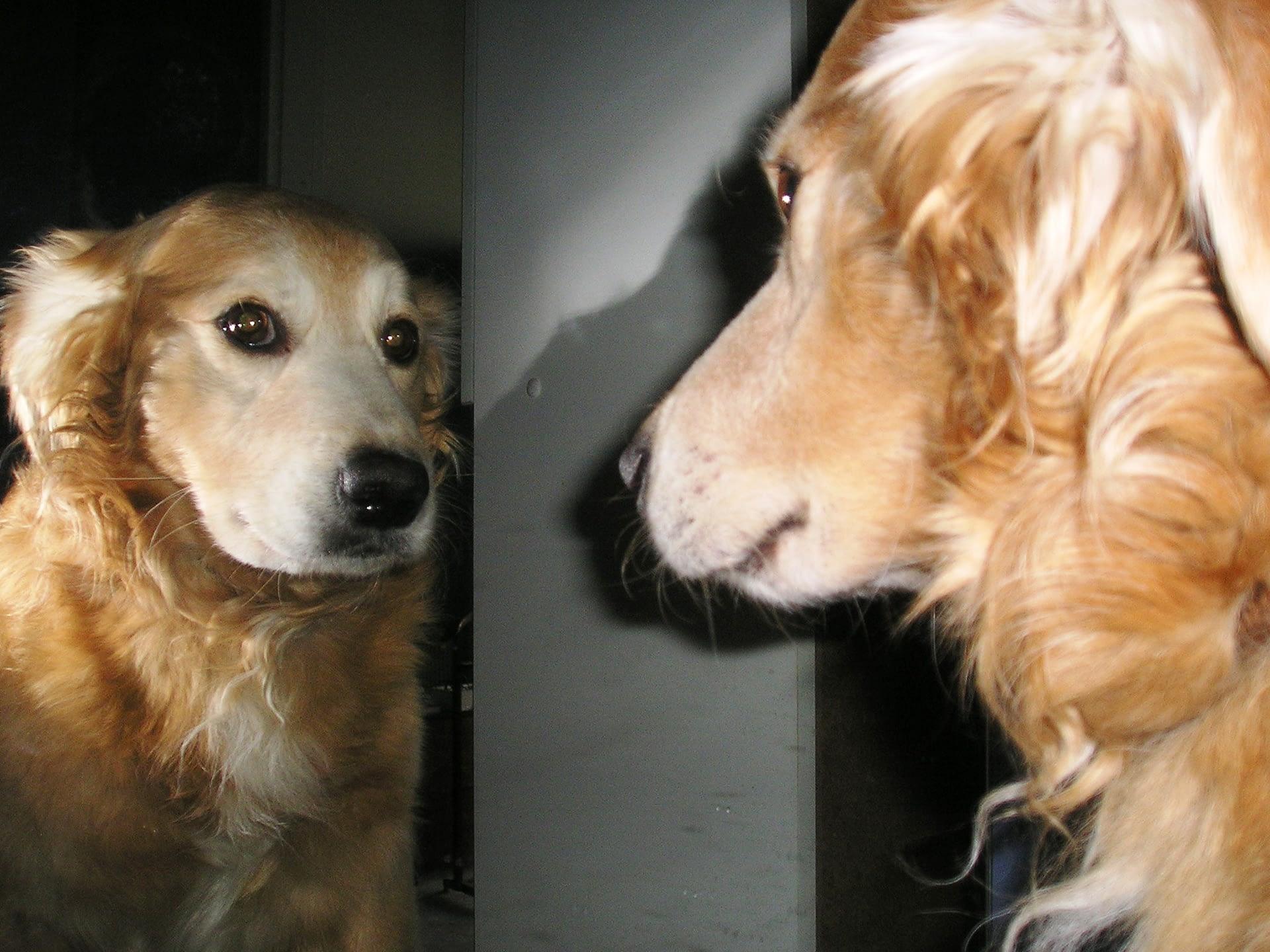 Perro doméstico (Autor: Georgia Pinaud)